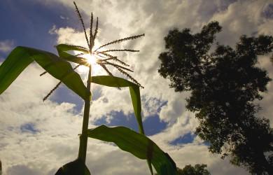 Innovation in the Argentinian seed industry